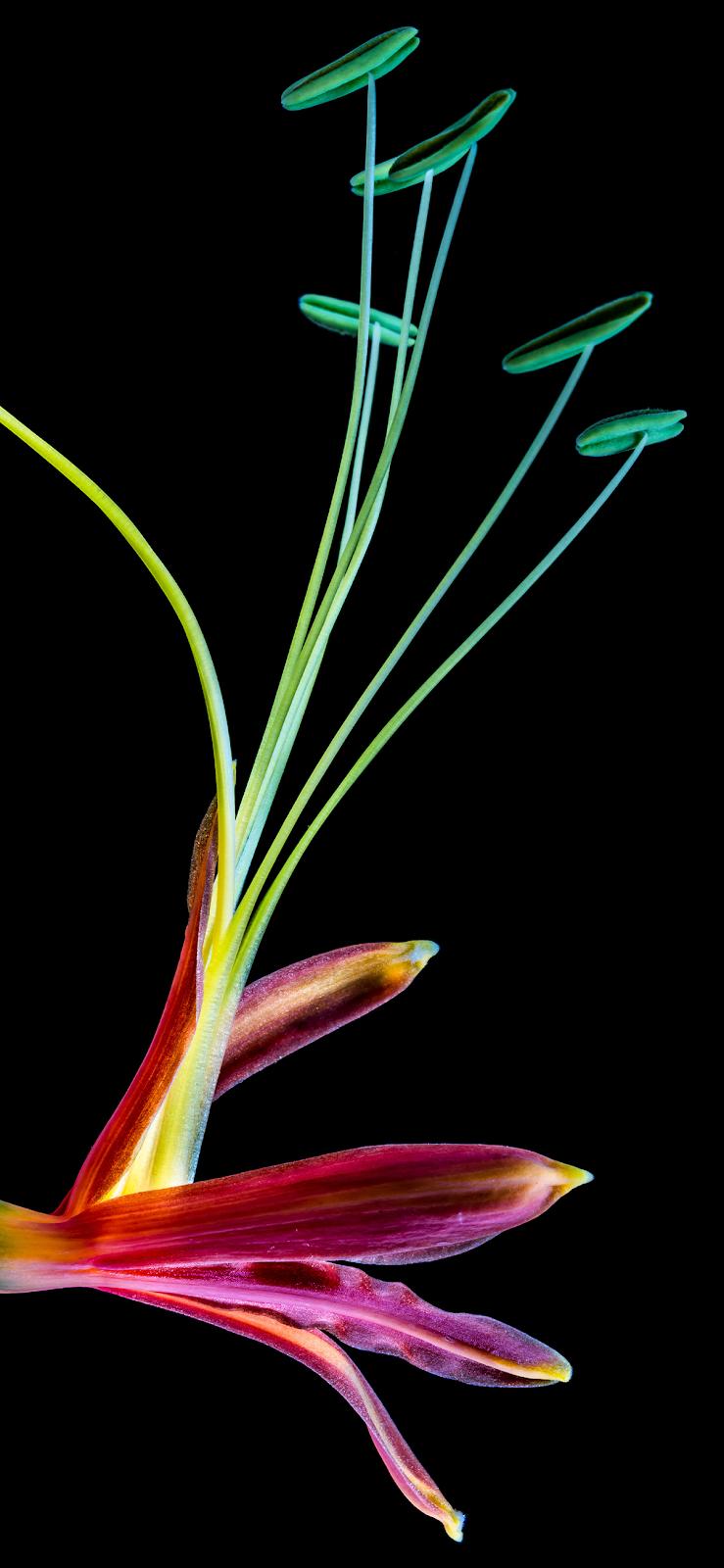 wallpaper-flower