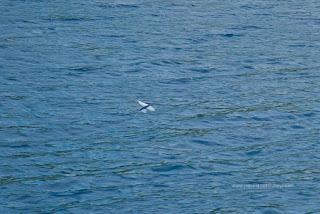 蘭嶼 飛魚祭 飛魚