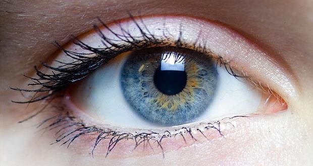 Human Eyes Facts