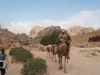 Camellos y actividad en Petra