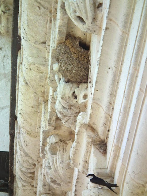 House Martin and nest, Chateau of Chenonceau.  Indre et Loire, France. Photographed by Susan Walter. Tour the Loire Valley with a classic car and a private guide.
