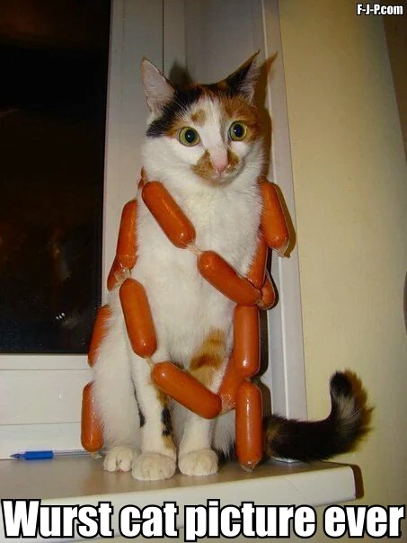 Funny Wurst Cat Picture Ever Pun Joke Picture