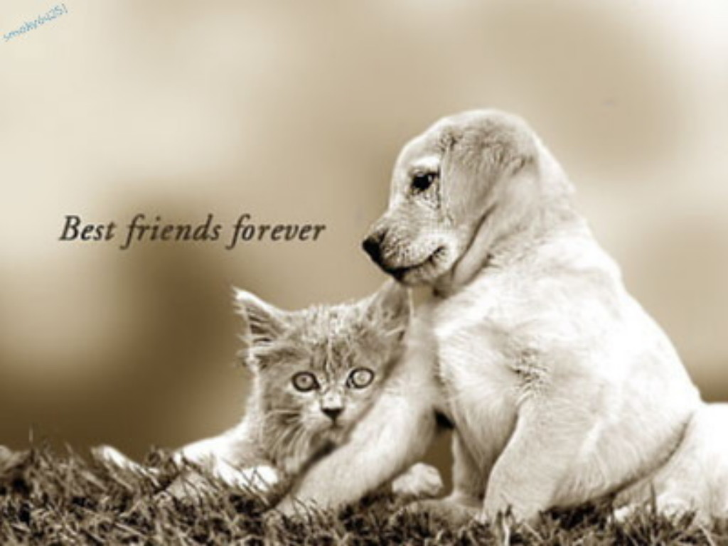 best friend wallpapers for whatsapp wallpaper images