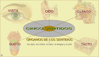 http://www2.gobiernodecanarias.org/educacion/17/WebC/eltanque/lossentidos/organosdelossentidos_p.html