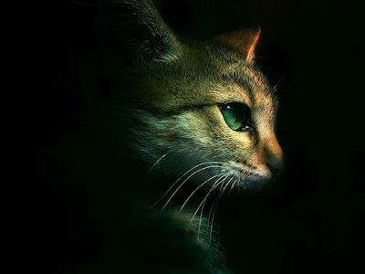 perfil-de-un-gato