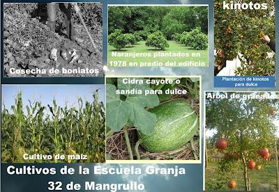 Cultivos de escuela granja 32 Mangrullo Enrique Brayer