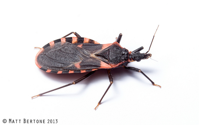 NCSU PDIC: Kissing Bugs and Chagas Disease in NC