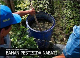 5 Jenis tumbuhan yang bisa dijadikan bahan Pestisida Nabati (PESNAB)