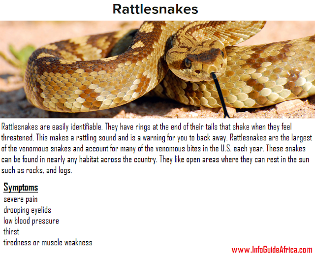 Description And Symptoms Of Rattlesnakes