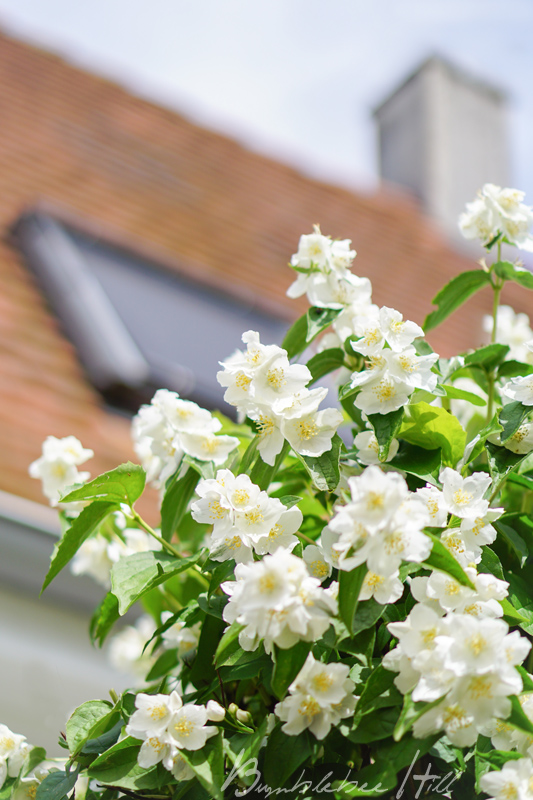 bumblebee hill lieblingsmonat juni frischer wind unterm dach. Black Bedroom Furniture Sets. Home Design Ideas