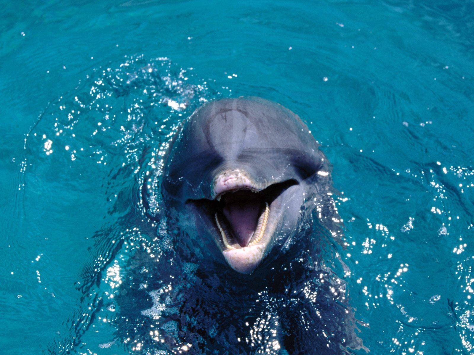 HD Dolphin Wallpapers - HD Animal Wallpapers