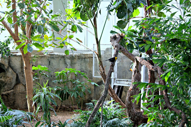 Birds and flora impress at The National Aviary.