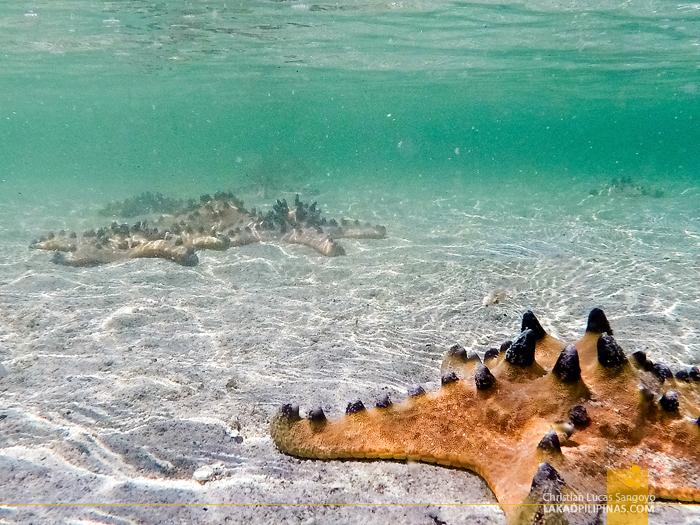 Once Islas Sirumon Island Snorkeling