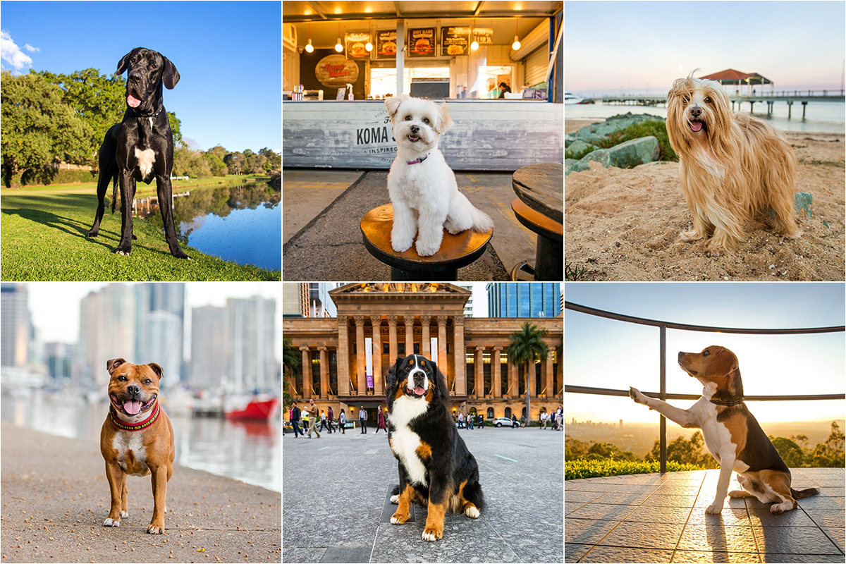 Tails of Brisbane Photography Book composite shot with six dogs