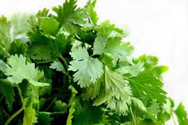 Benefits of Coriander for Ulcer which is important to know - Healthy T1ps