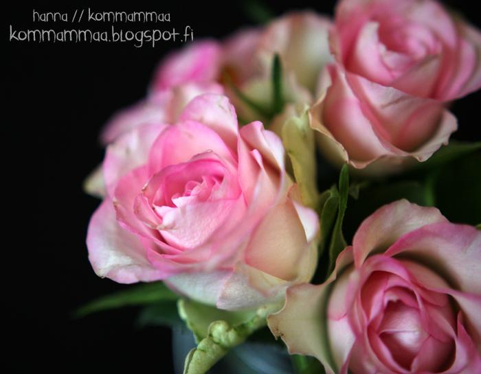 ruusu vaaleanpunainen pinkki hempeä häät