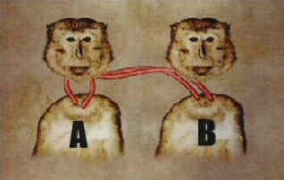www.fertilmente.com.br - Esquema do transplante total de cabeça realizado pelo Dr. Sergei Brukhonenko em macacos