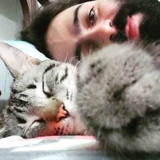 gato-de-autor-gatitaecia