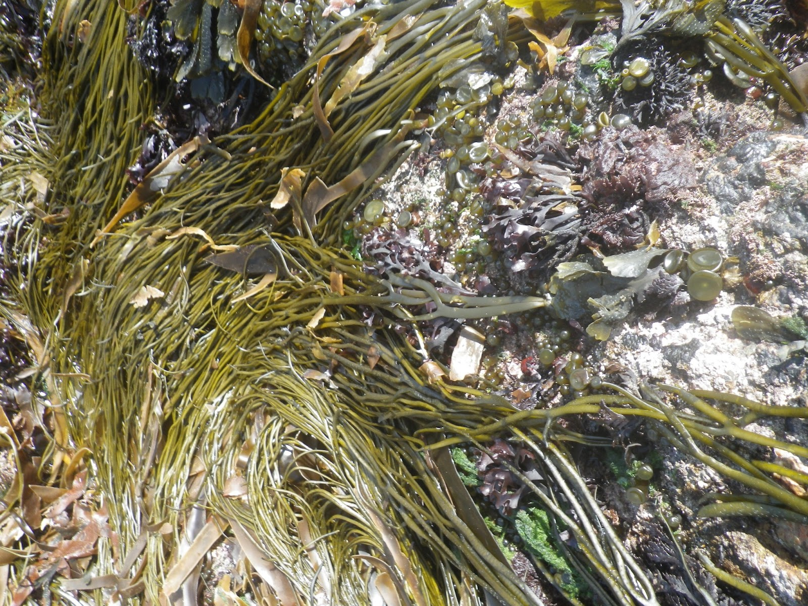 Rock Pooling Rock Pooling Destination White Island Isles Of Scilly