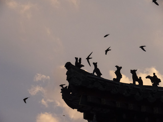 Swifts at dusk in Xi'an China