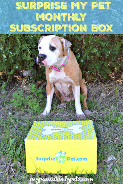 Make Your Dog Smile With Surprise My Pet Monthly Subscription Box