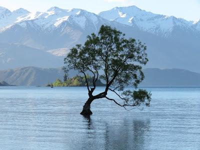 Relato de viagem de motorhome pela Nova Zelândia: Dias 21 e 22 - Haast Pass e Wanaka