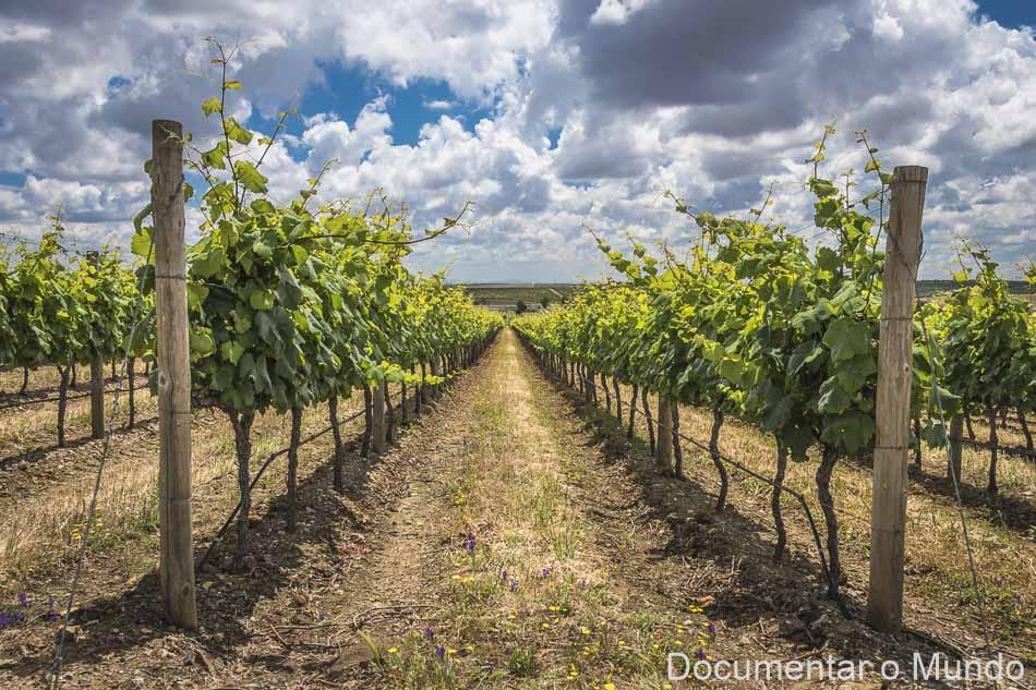 Ribafreixo Wines, Herdade do Moinho Branco, adegas Vidigueira, Vinhos do Alentejo