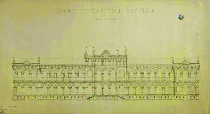 museo storia naturale milano progetto ceruti