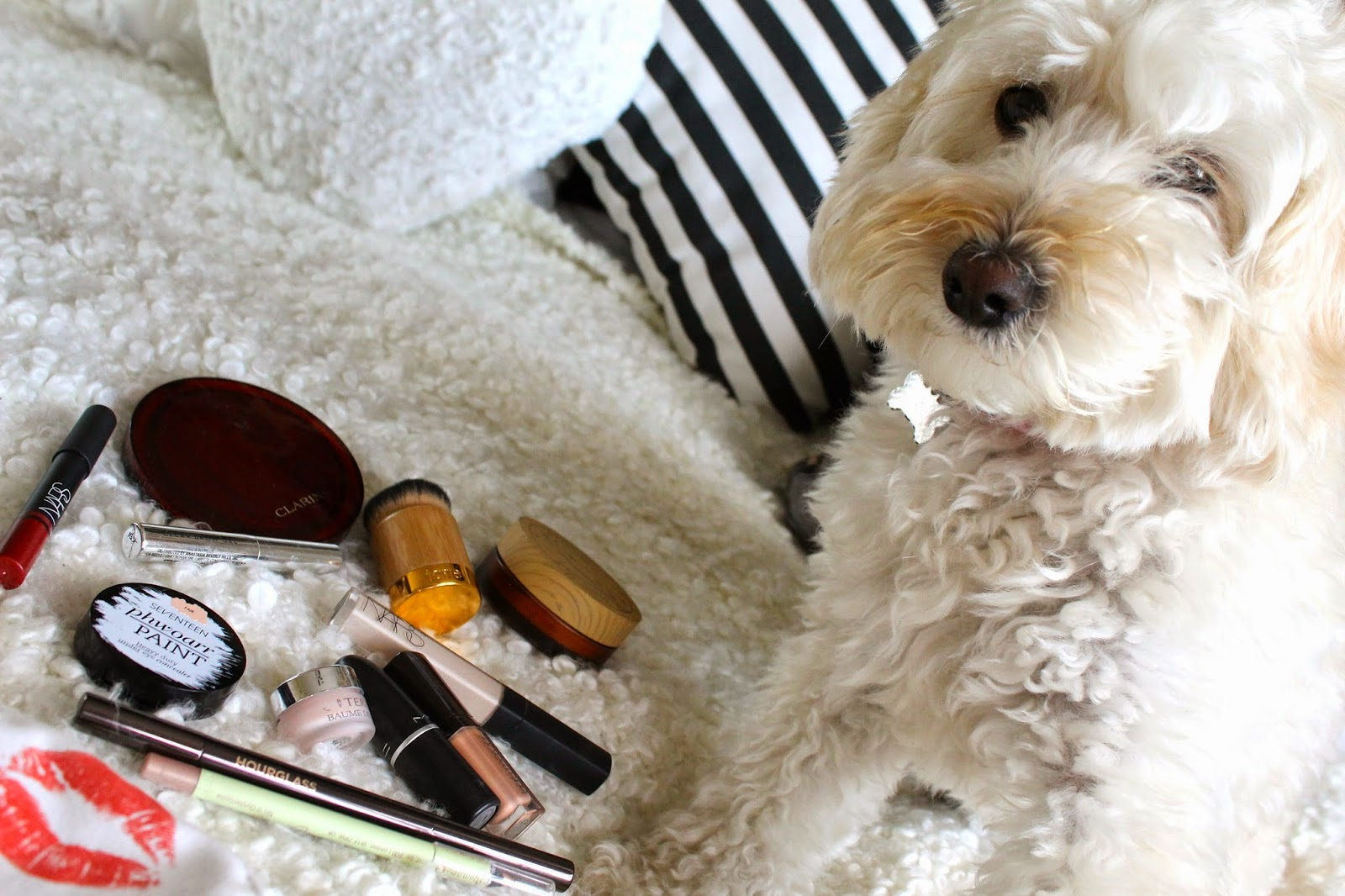 Cockapoo, What's In My Make Up Bag