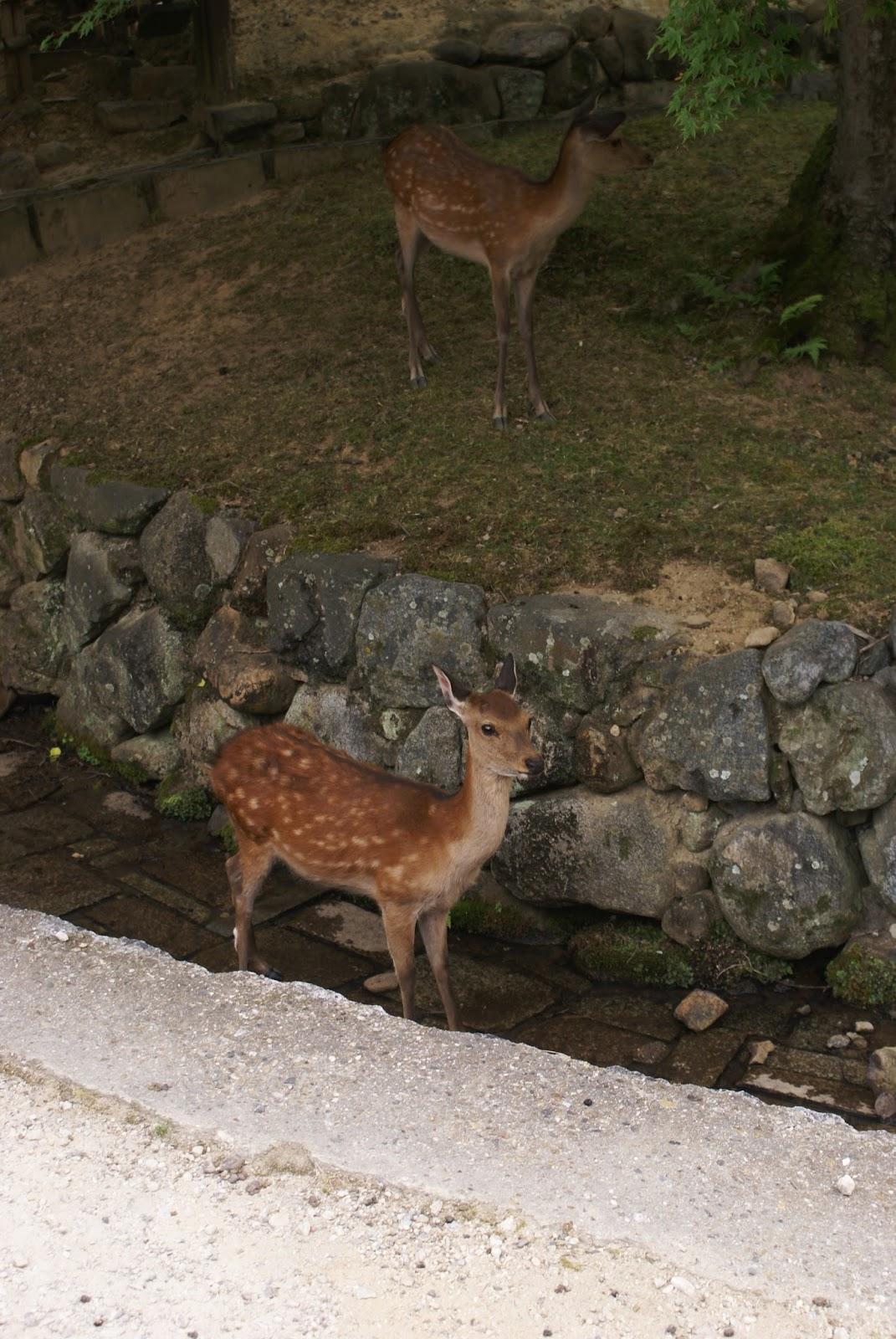 shika nara koen park japan kansai