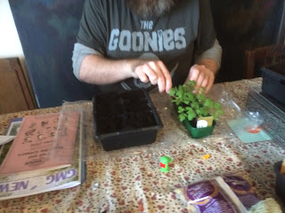 Pricking out, life on pig row