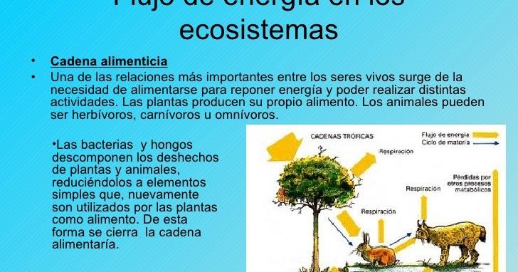 Tics el flujo de energ a y nutrientes en los ecosistemas for Cuales son los cajeros red