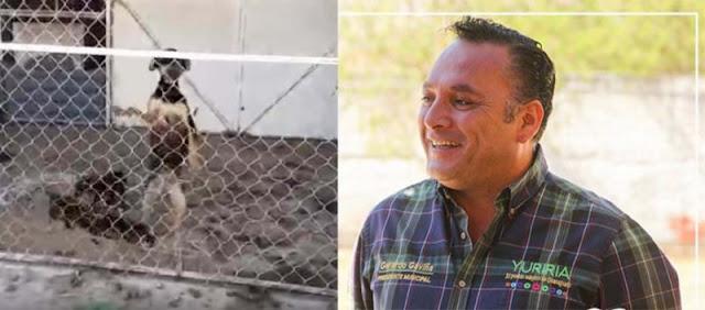 Alcalde del Partido Verde ordena sacrificar a perros, le valió que algunos tenían dueño