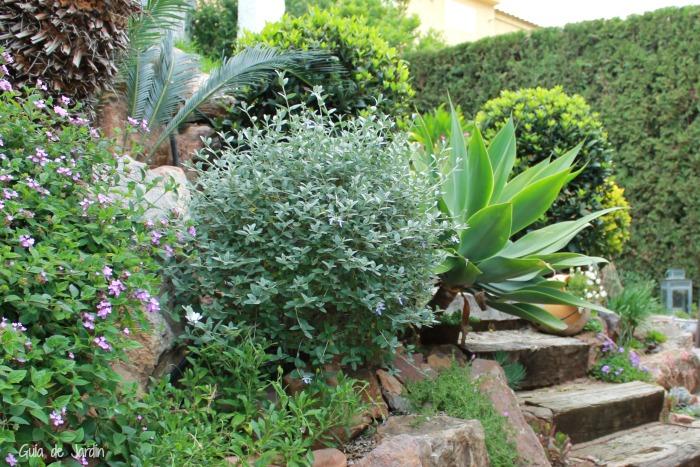 10 errores de jardinero principiante que debes evitar for Plantas para el jardin todo el ano