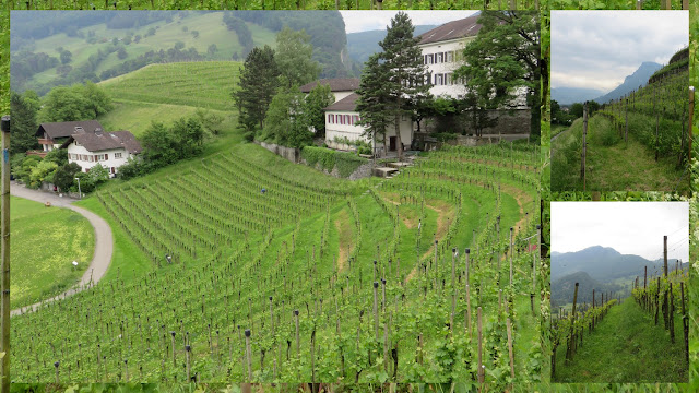 Zurich to Liechtenstein day trip: Vineyards in Balzers, Liechtenstein