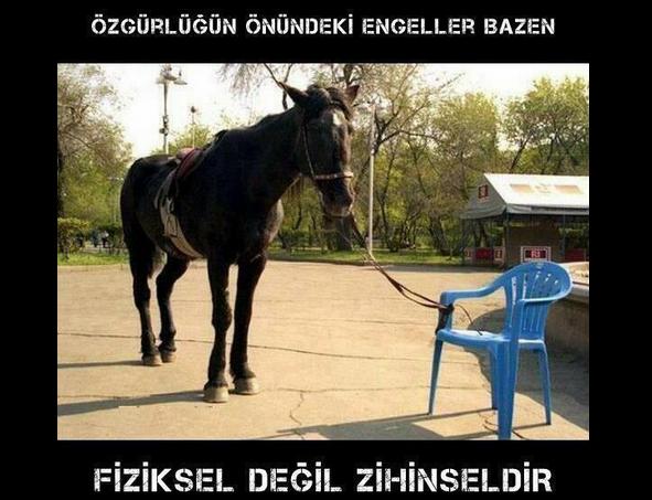 sandalye, at, beygir, sokak, özgürlük,