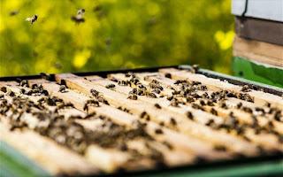 Τα προϊόντα που προέρχονται από μέλισσες «καταστέλλουν» τα Καρκινικά Κύτταρα