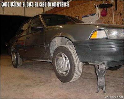 gato_coche.jpg