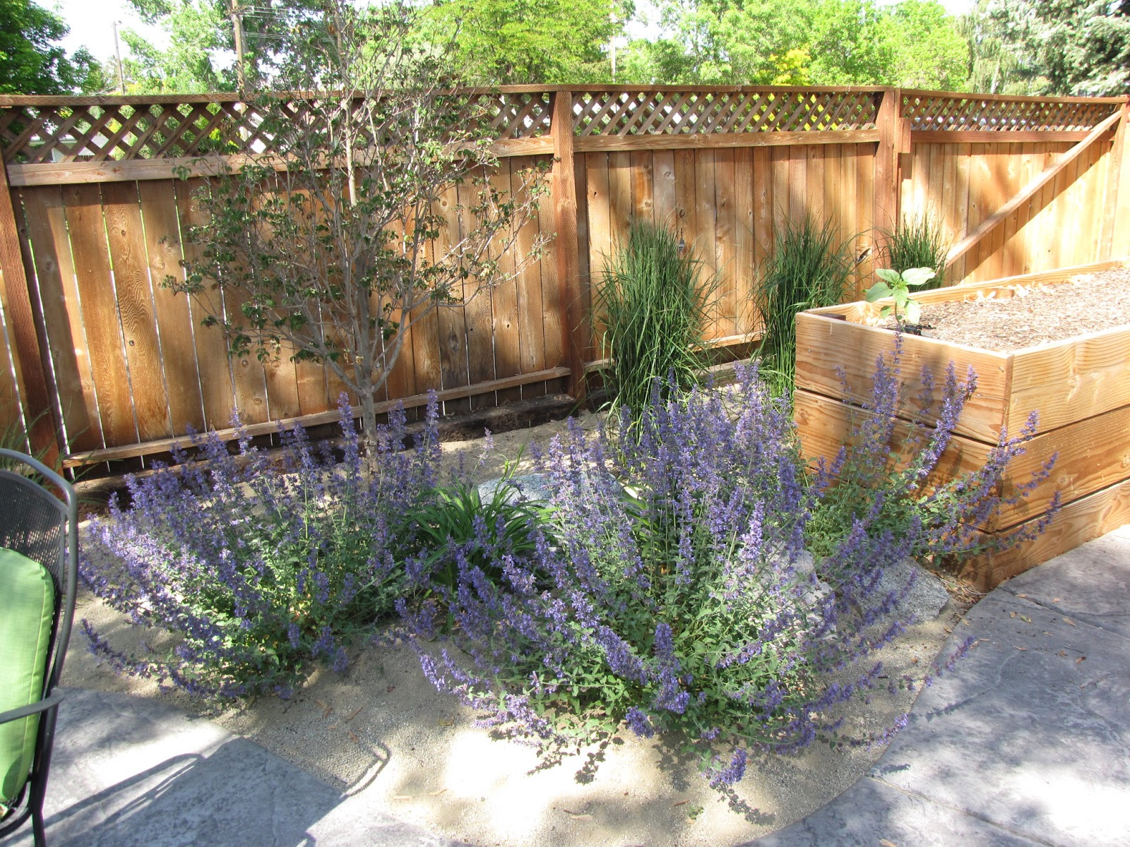 The Art of Landscaping: Dog-Friendly Landscaping