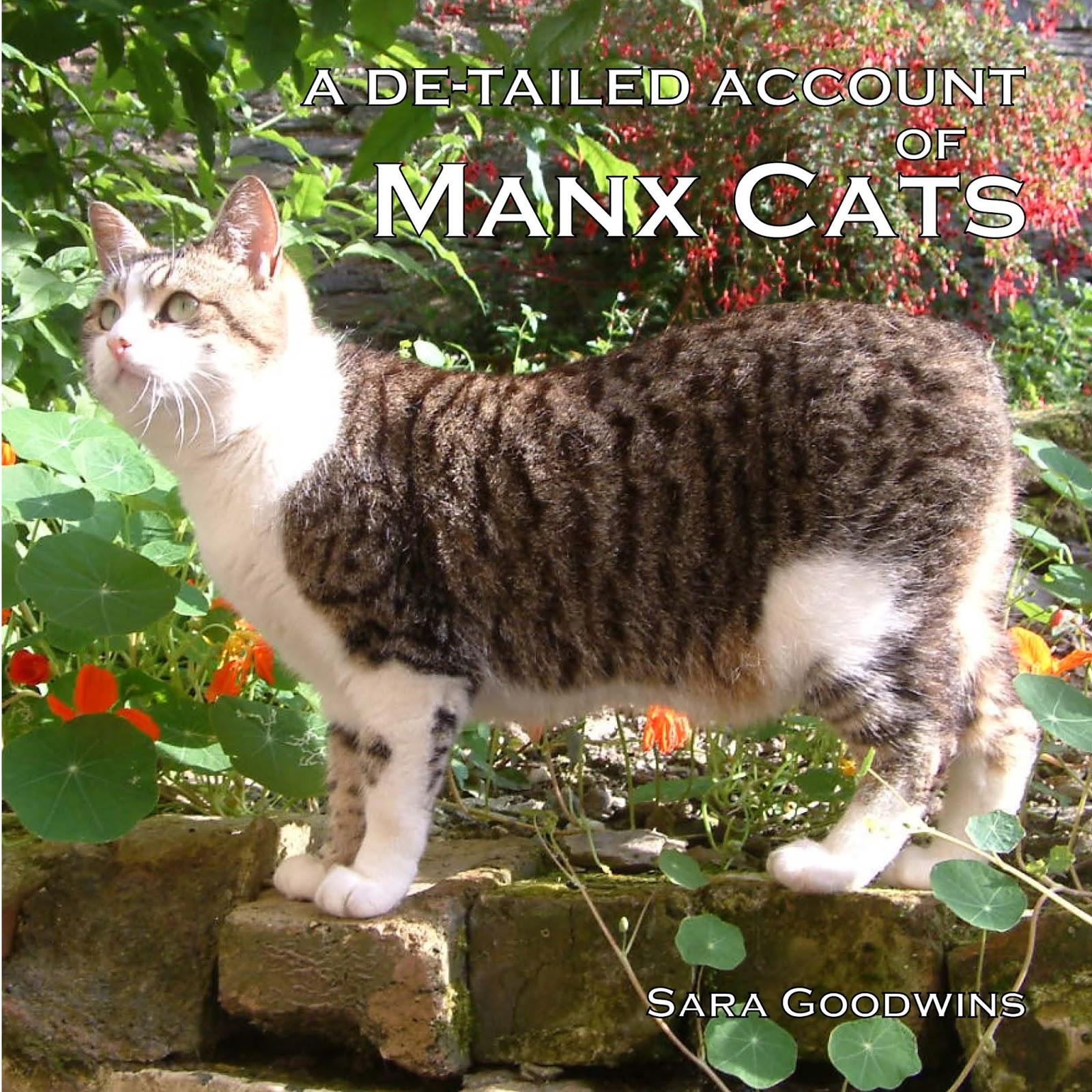 Deydream Manx  |Manx Cat History