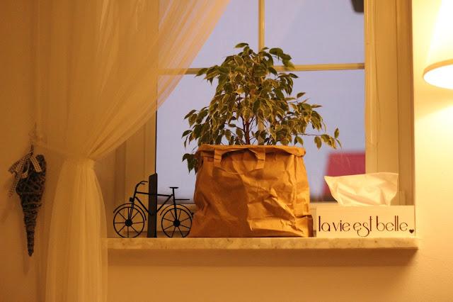papierowe torby jako doniczki, papierowe doniczki, witryna Hemnes,
