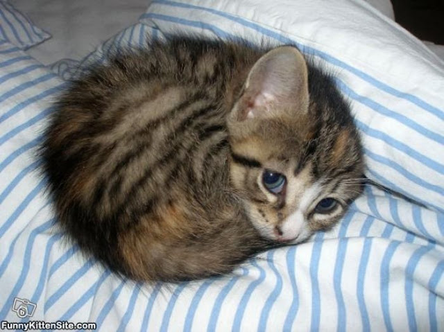 kucing comel tidur