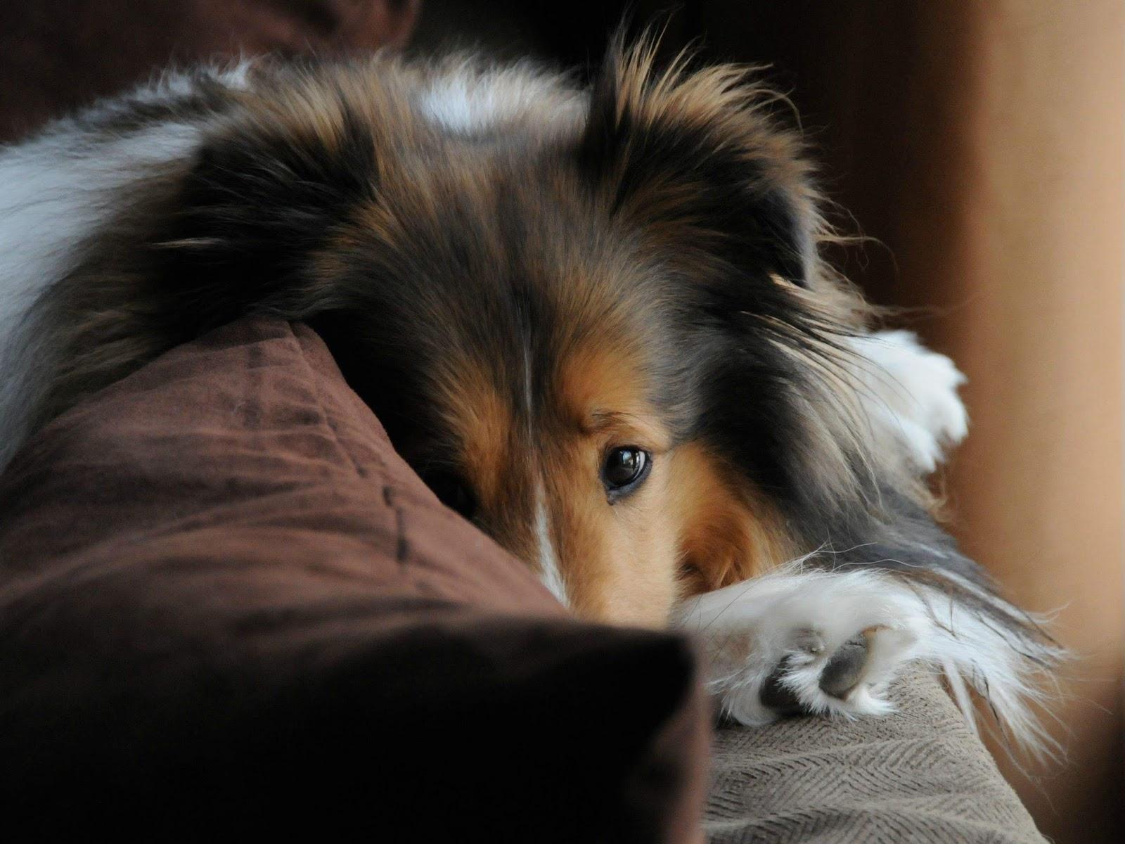 Cute dogs - part 119 (50 pics) | Amazing Creatures