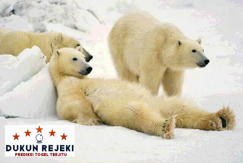 Berkenalan Dengan Hewan-Hewan Asli Kutub Utara
