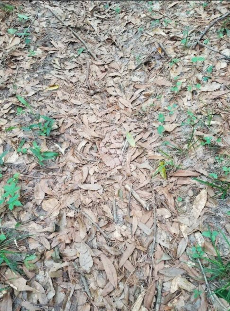 TRENDING: Almost 90% of the Online Community Never Saw the Snake in This Picture! Can You Find It?