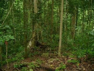 Penggolongan, Manfaat dan Jenis-jenis Hutan di Indonesia