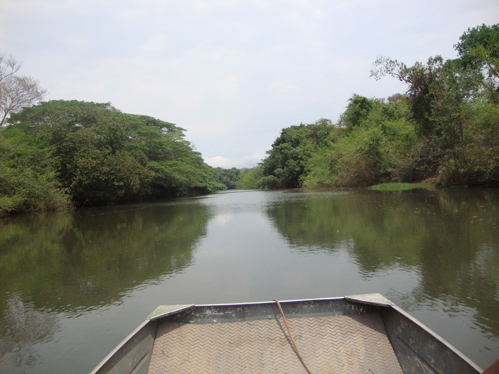 Trecho da Mata Ciliar do  Rio das Almas na cidade de Jaraguá – no Cerrado do Centro Oeste – Goiás