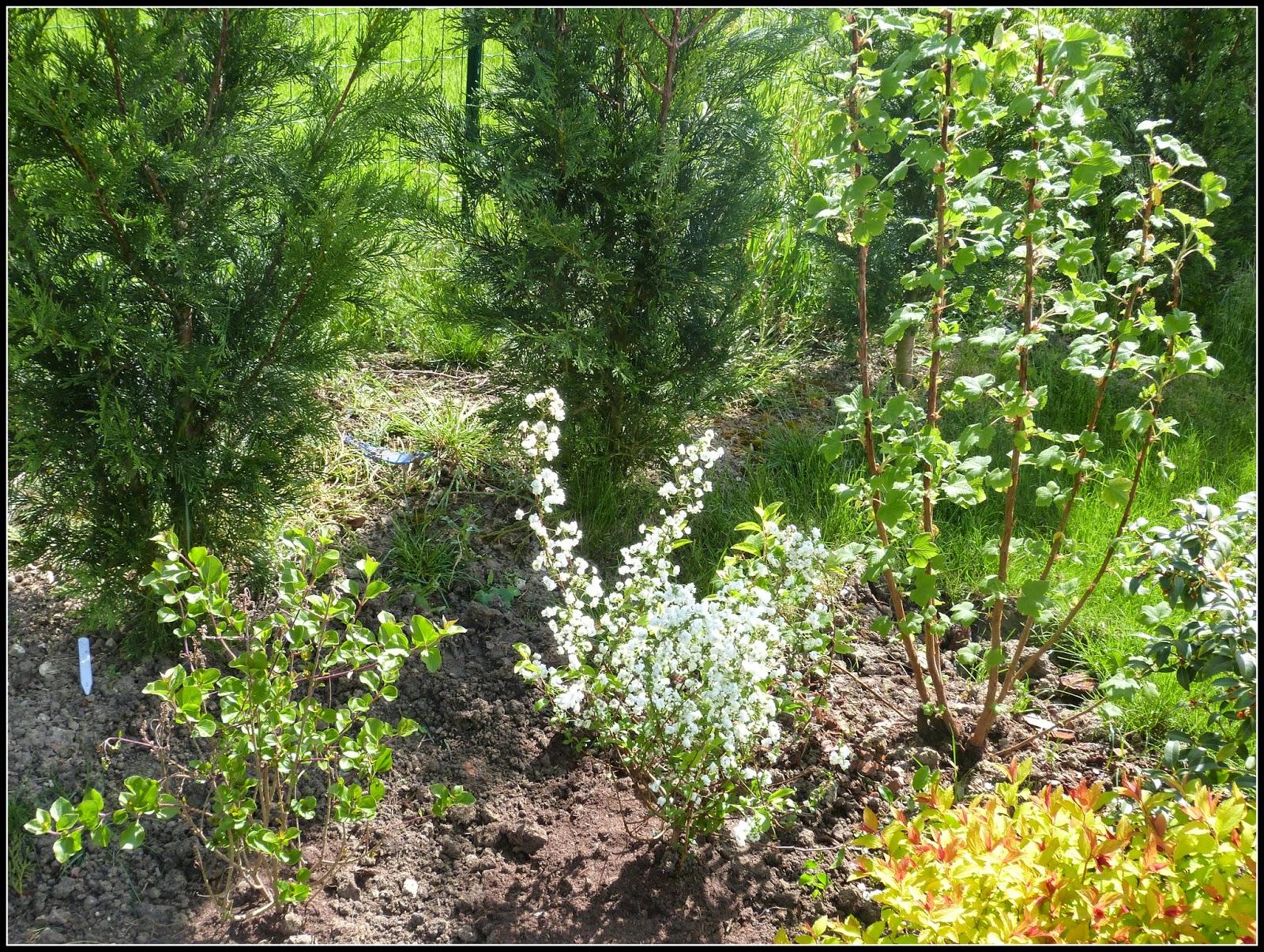 plantation fleurs avril cheap jai plant leur pied des aubriettes pourpres qui ds mars et avril. Black Bedroom Furniture Sets. Home Design Ideas