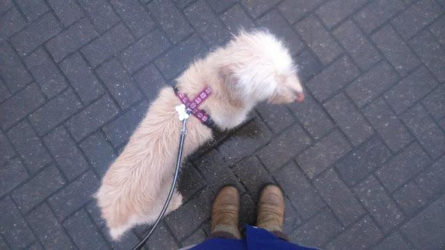 Internationaler Tag Welttag Gassi-Gehen Geh mit deinem Hund raus