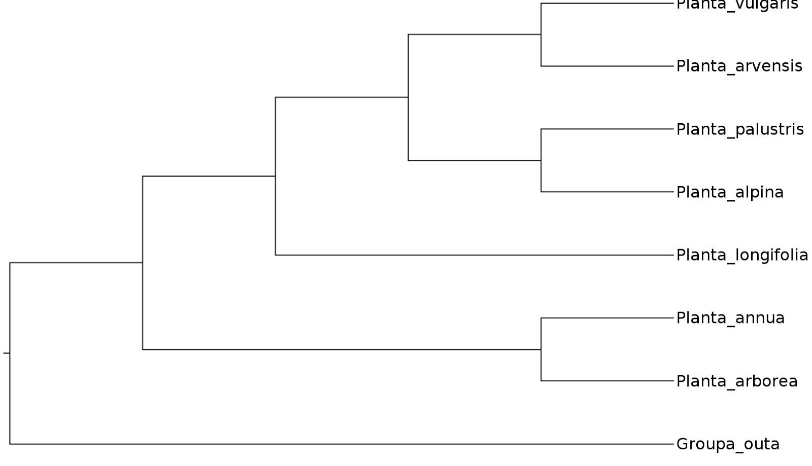 Branches Branching Tree Diagram 88 Fiero Radio Wiring Phylobotanist Types Of Phylogenetic Diagrams